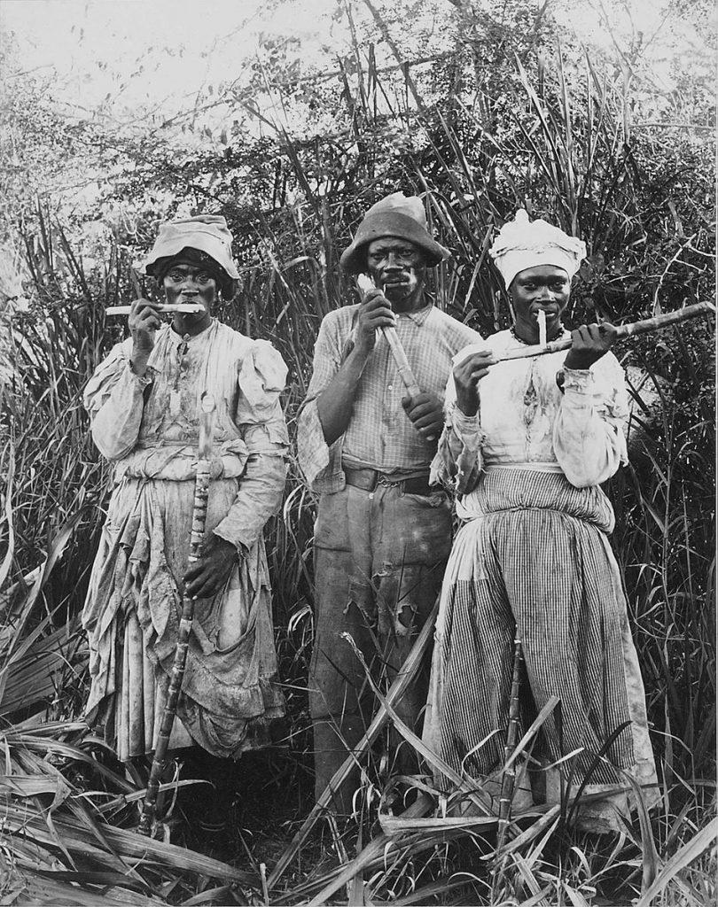Storia dei dreadlocks su Dreadhead Italia: lavoratori della canna da zucchero in Giamaica, 1880